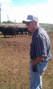 Don Zahorsky in a pen full of bulls.