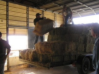Farm family loading hay bales on a trailer.