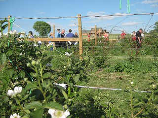 Fruits of the Spirit agritourism also started as a project for the kids, and is now a business of its own. Photo by Becky McCray.