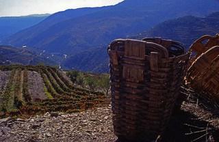 Harvest baskets on a hillside overlooking grape vines in the valley below.