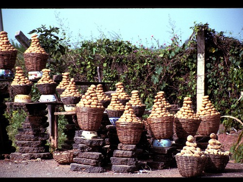 Baskets full of potatoes.