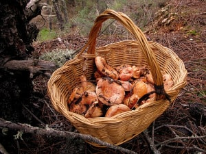 Bring your discoveries to the Brag Basket