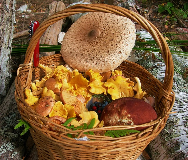 Basket of forest gifts by Inga Vitola on Flickr. Taken near the small town of Priekule, Latvia.