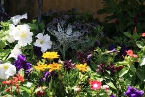 Monas flowers