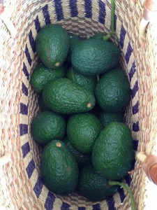 Basket of avocados by 305 seahill on Flickr