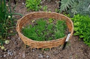 Let your good news grow inside the Brag Basket