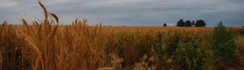 How do wheat farmers survive the ups and downs of good years and bad years? They Plan for Zero. Photo by Becky McCray.