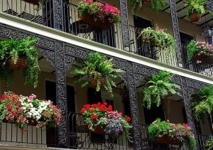 Baskets in New Orleans French Quarter. Photo by David Ohmer on Flickr