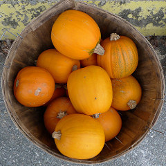 Basket of pumpkins. Photo by Lori L. Stalteri