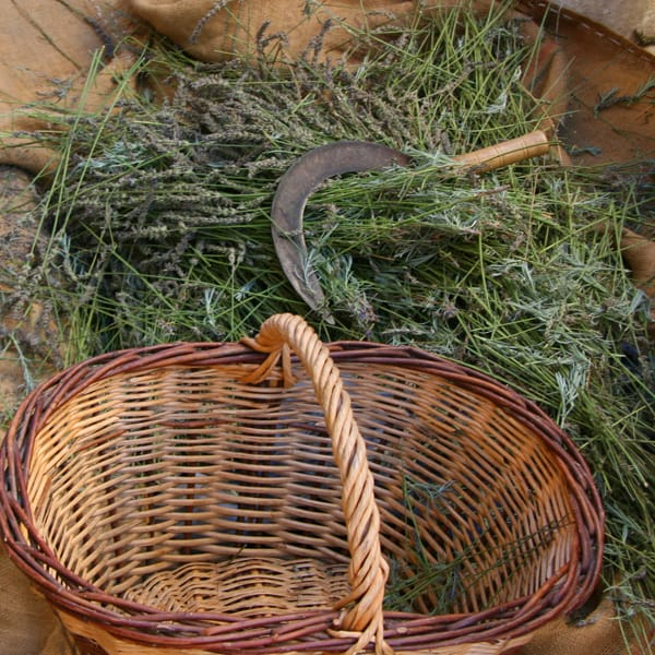 Basket lavender. Photo CC by Couleur Lavande