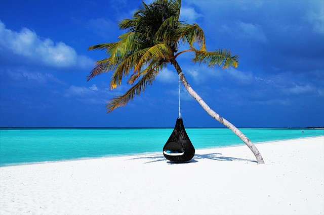 Basket chair hanging from a palm tree over an empty white sand beach